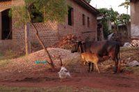kuh_in_uganda